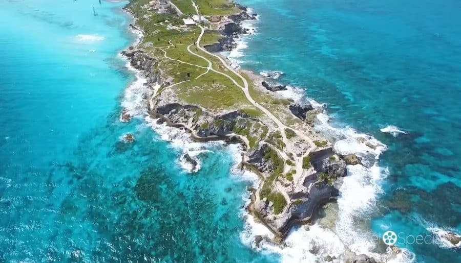 Drone Footage of Isla Mujeres for the Travel Channel